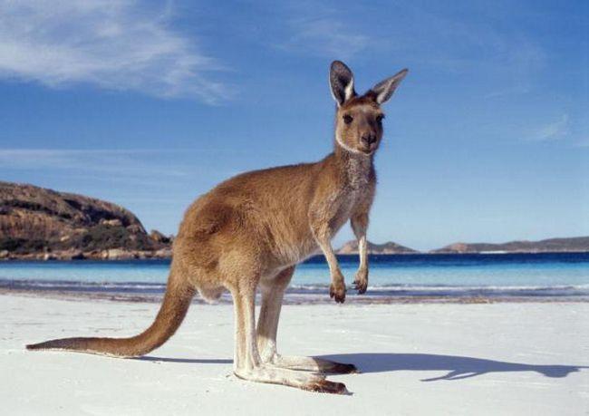 Фото - Австралія: форма правління, опис, історія та цікаві факти