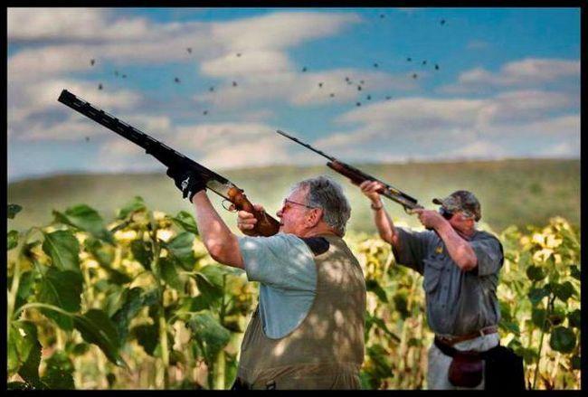 Фото - Болотяна лугова дичину: список, види і особливості полювання. Болотно-лугова і польова дичину: перелік і особливості полювання