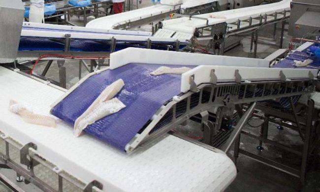 Фото - Цех з переробки риби: обладнання, технології