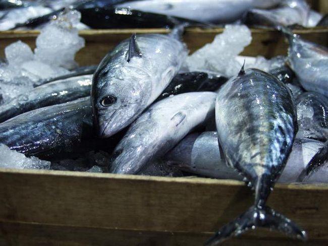 обладнання для переробки риби