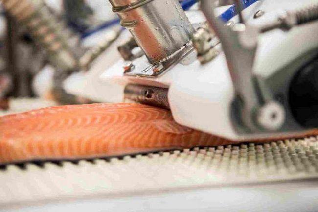 обладнання для переробки риби і морепродуктів
