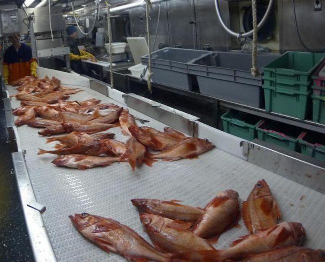 завод з переробки риби