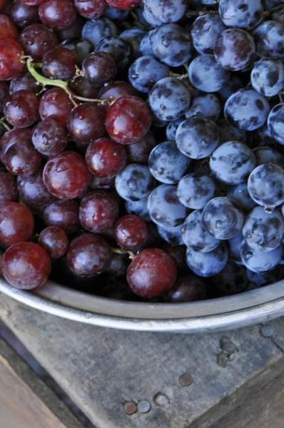 виноград изабелла що можна приготувати