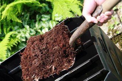 Фото - Що таке компост? Органічні добрива, садівництво та городництво