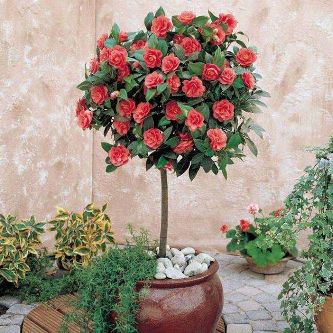 Фото - Квітучий кімнатна квітка: назва та фото