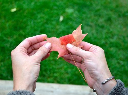 квіти з листя дерев своїми руками