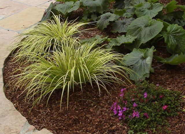 Фото - Декоративна тріска - безцінний матеріал в садовому дизайні