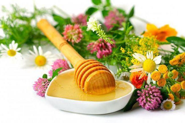 Фото - До якої температури можна нагрівати мед: поради та рекомендації. Чи можна нагрівати мед і втрачає він корисні властивості