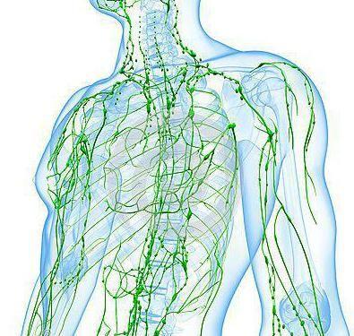Фото - Фолікулярна лімфома: симптоми, причини, лікування. Період ремісії і рецидив фолікулярної лімфоми