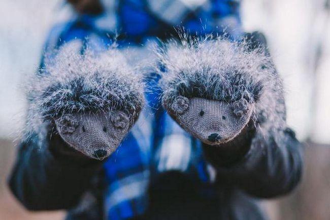 їжакові рукавиці