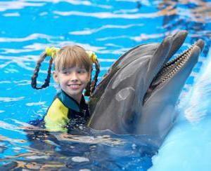 Фото - Де можна плавати з дельфінами в Москві?
