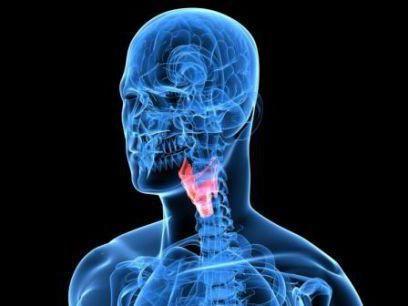 Фото - Гормон щитовидної залози в таблетках: інструкція та відгуки