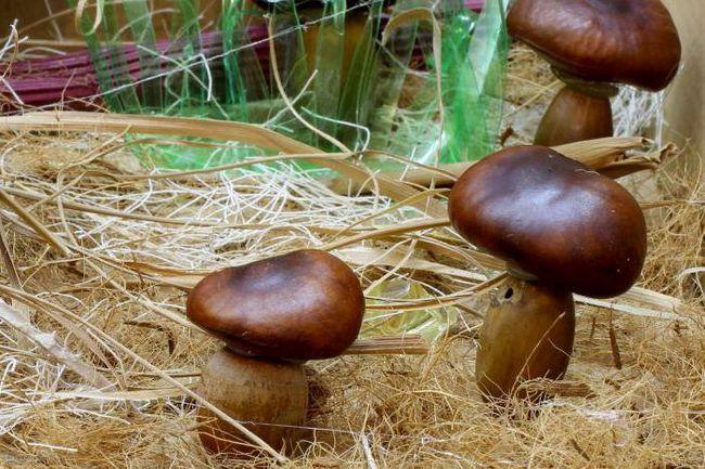 саморобка гриби з природного матеріалу