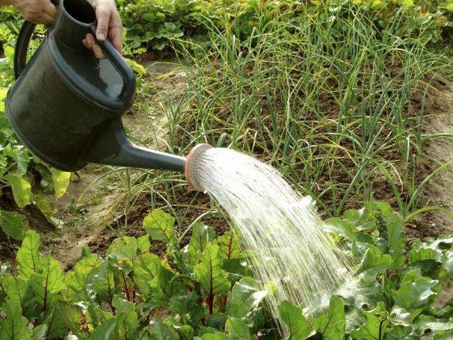 Фото - Іригаційна система - це підведення води на поля. Зрошення