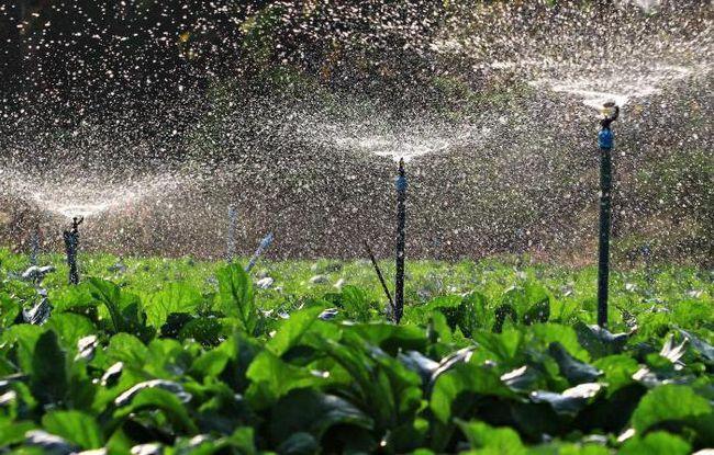 іригаційна система землеробства