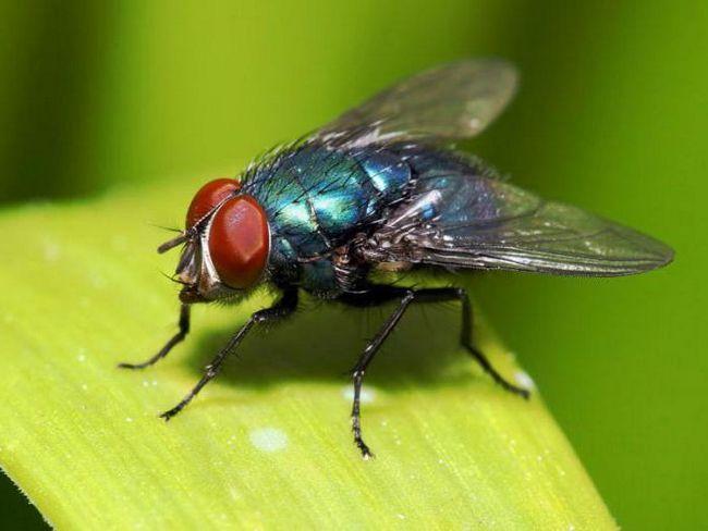 історія фразеологізму мухи не образити