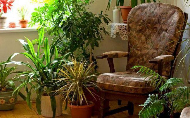 Фото - З чого можна зробити добриво для кімнатних рослин в домашніх умовах?