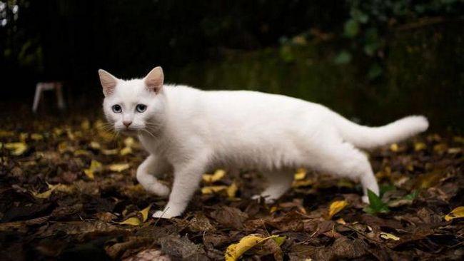 До чого сниться біла кішка