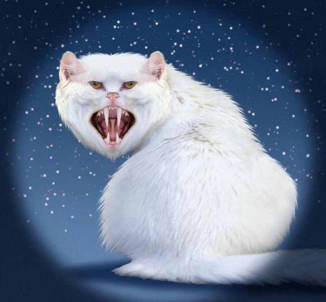 Біла кішка уві сні