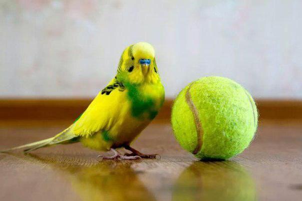 до чого сниться пташеня в руках