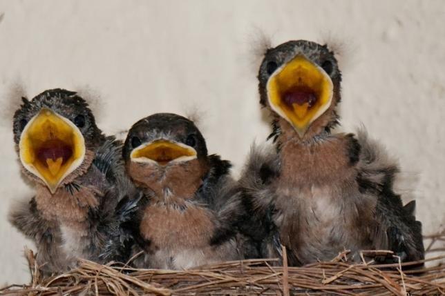 до чого сниться пташеня папуги