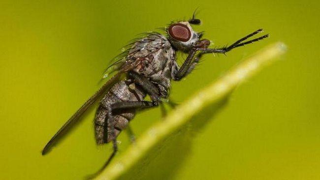 Фото - Як позбутися від мух в дерев'яному будинку? Народні засоби та побутова хімія