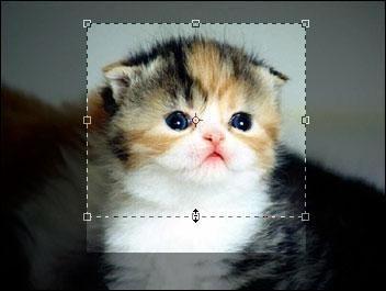 Фото - Як змінити розмір зображення в