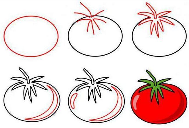 Фото - Як намалювати помідор олівцем і аквареллю, в розрізі і цілий?
