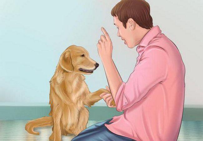 Фото - Як зробити собаку злий на чужих людей. Поради та рекомендації