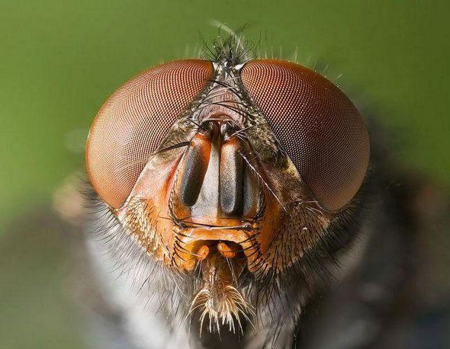 Фото - Як убити муху в домі?