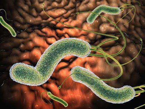 як вивести паразитів з організму людини таблетками