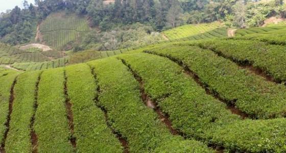 Фото - Який найсмачніший чай і корисний? Назва, види та відгуки