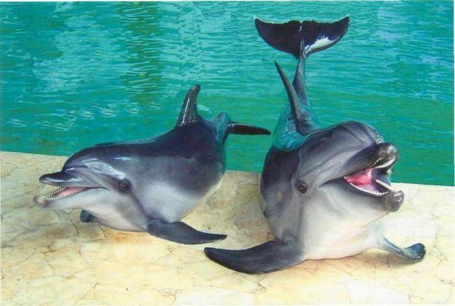 Фото - Який сочинський дельфінарій найкращий?