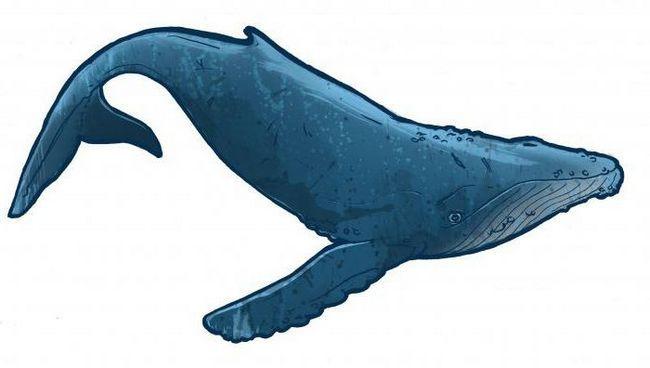 Фото - Кіт - це риба або ссавець? Цікаві факти про китах