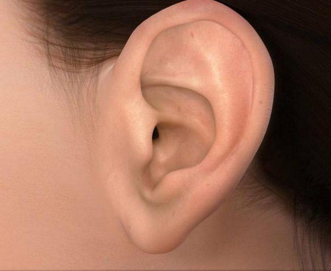 анатомія вуха