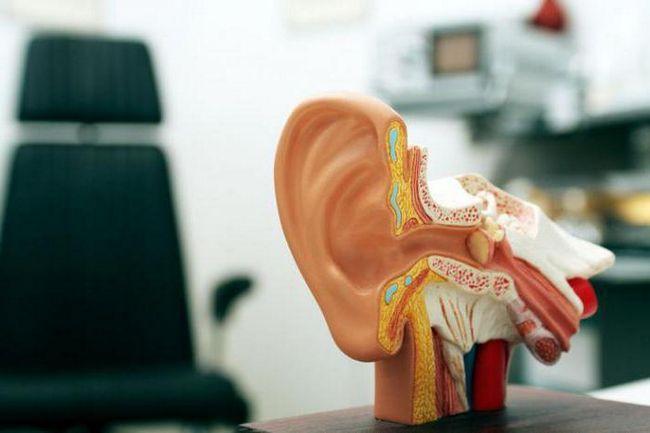 будова вуха людини анатомія