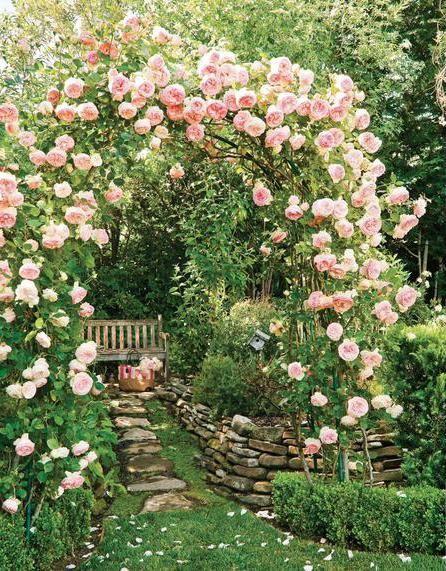 в який час краще садити троянди
