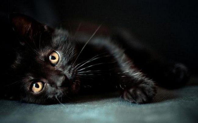 Фото - Кішка чорна. Порода: назви і особливості