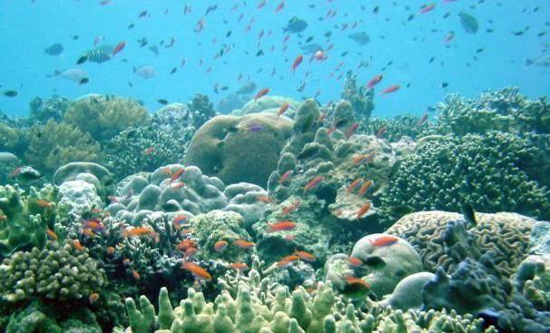Фото - Морські монстри. Найстрашніші чудовиська