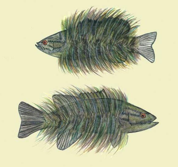 На риб'ячому хутрі значення фразеологізму