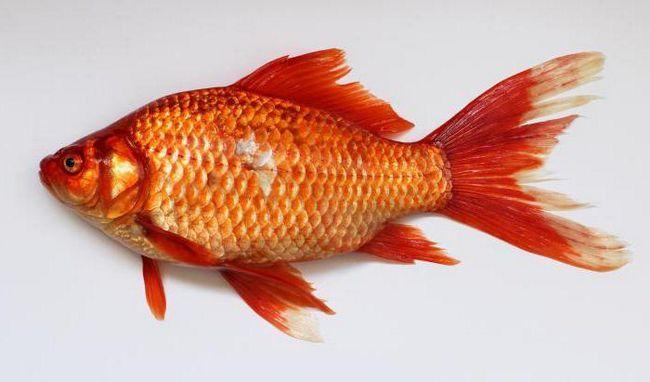 Фразеологізм на риб'ячому хутрі