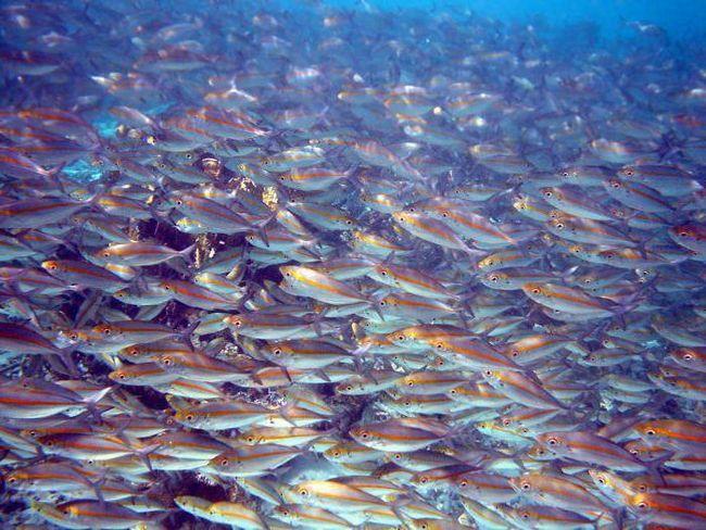 наука про риб