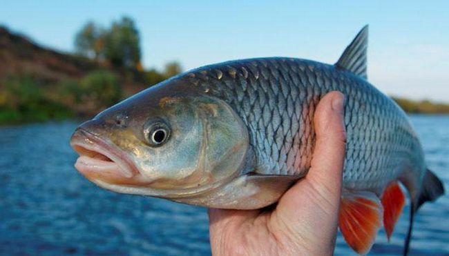 наука вивчає риб