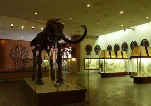 парк динозаврів фото