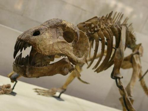 парк динозаврів в москві на вднх