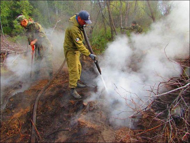 Лісові пожежі визначення