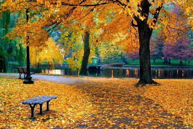 Фото - Осіння фотосесія в парку: ідеї, пози
