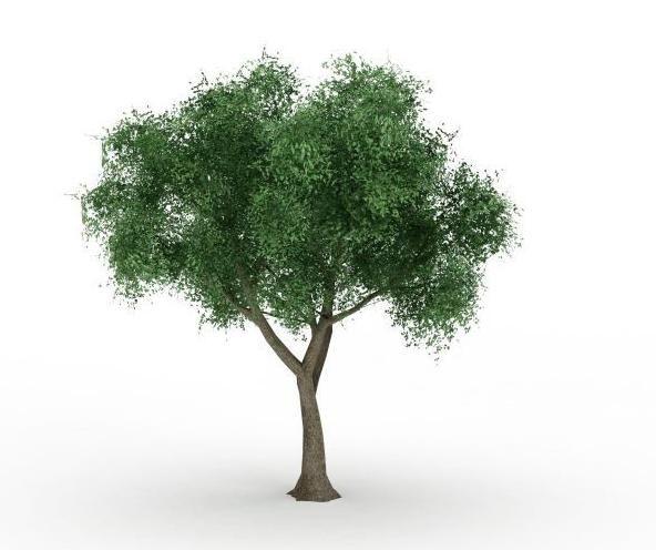 Фото - Осикові листя при лікуванні геморою. Народні рецепти