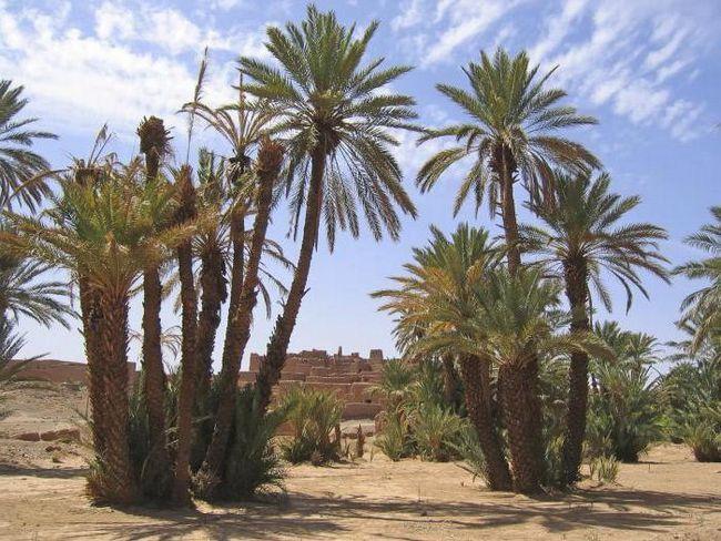Марокко пляжний відпочинок в жовтні