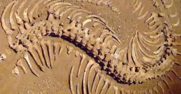 історія палеонтології
